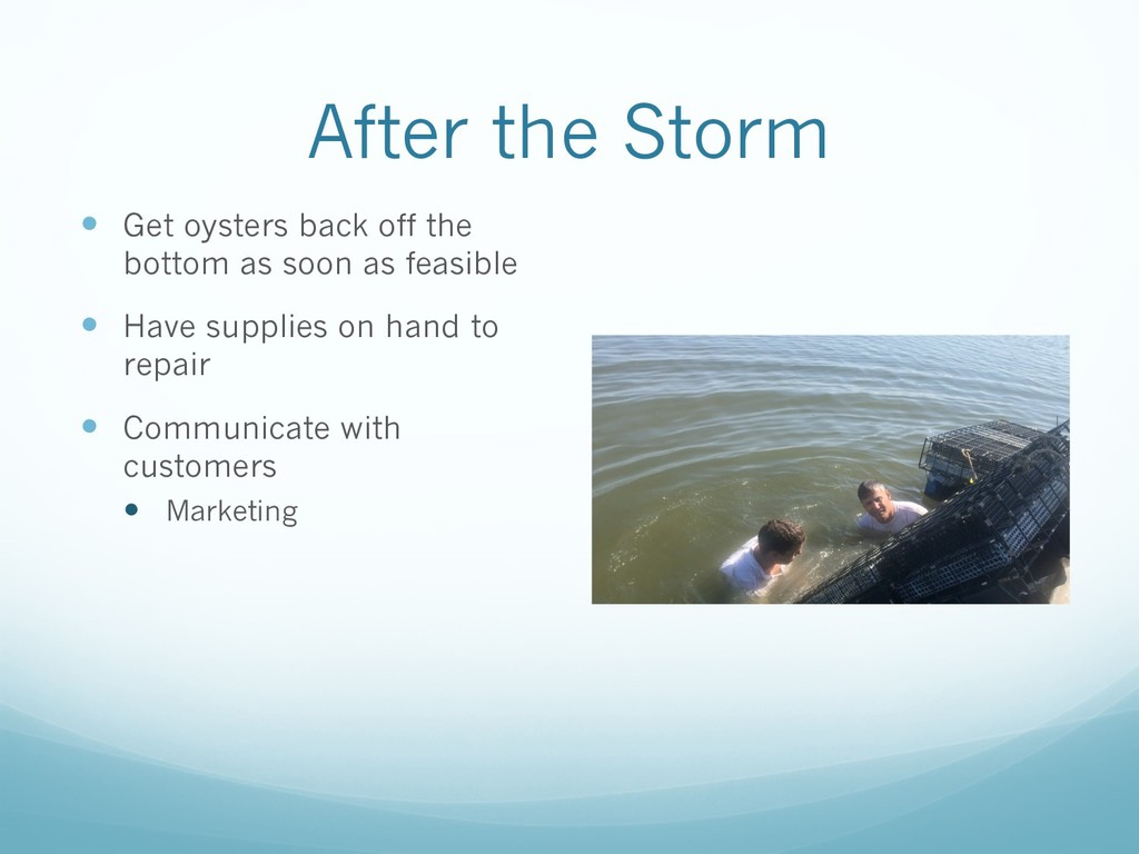 After the Storm — Get oysters back off the bott...