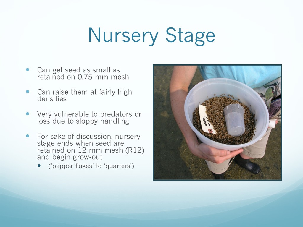 Nursery Stage — Can get seed as small as retain...