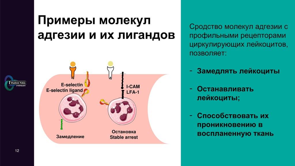 12 Примеры молекул адгезии и их лигандов Сродст...