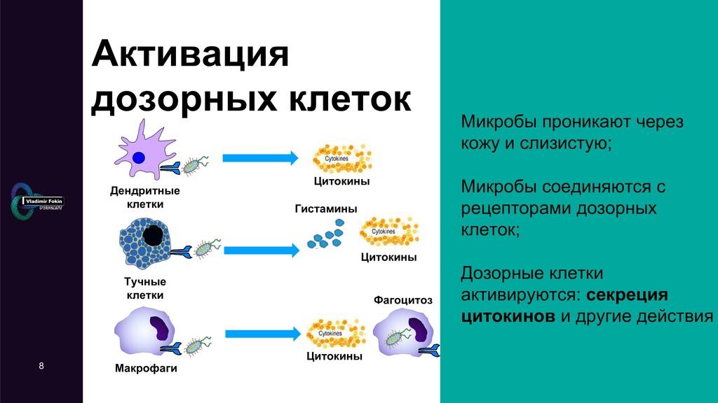 8 Активация дозорных клеток Микробы проникают ч...
