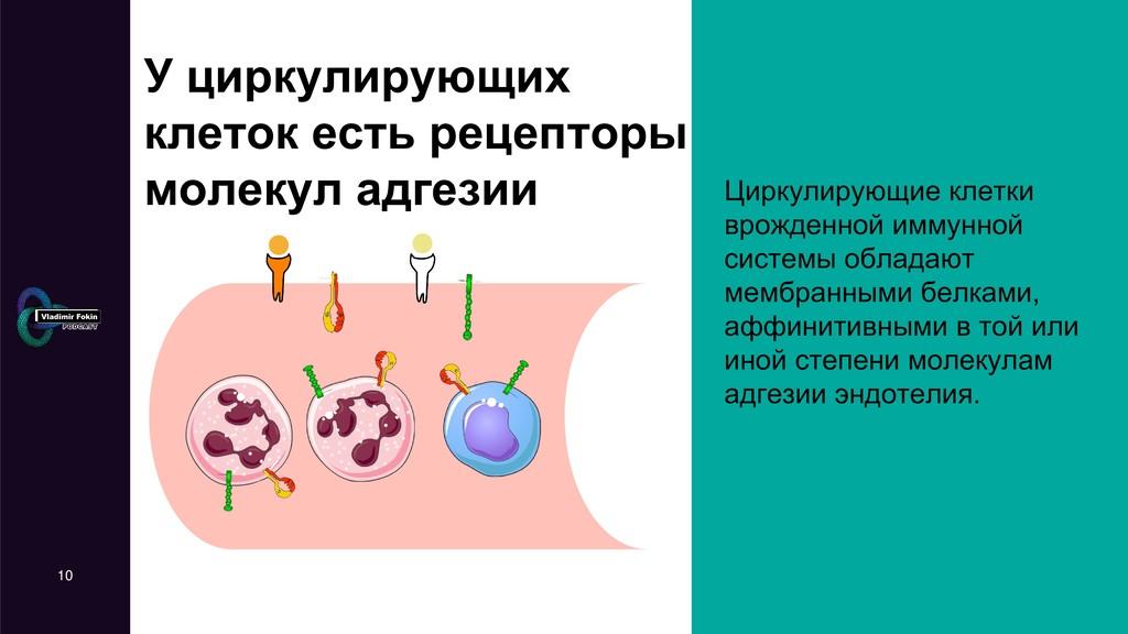 У циркулирующих клеток есть рецепторы молекул а...