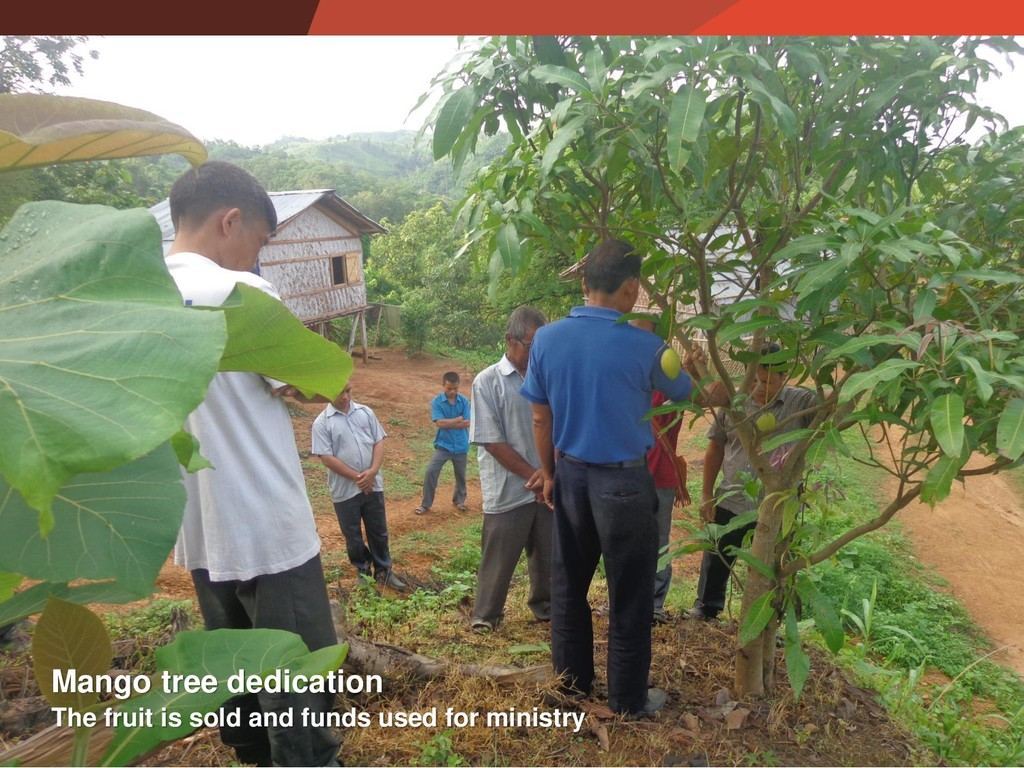 The fruit is sold and funds used for ministry M...