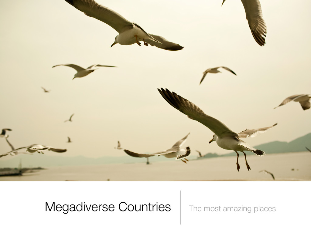 Megadiverse Countries The most amazing places