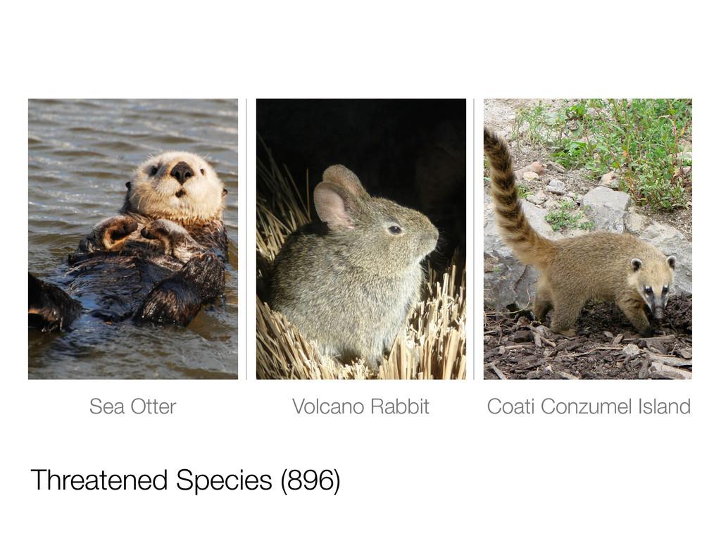 Threatened Species (896) Sea Otter Volcano Rabb...