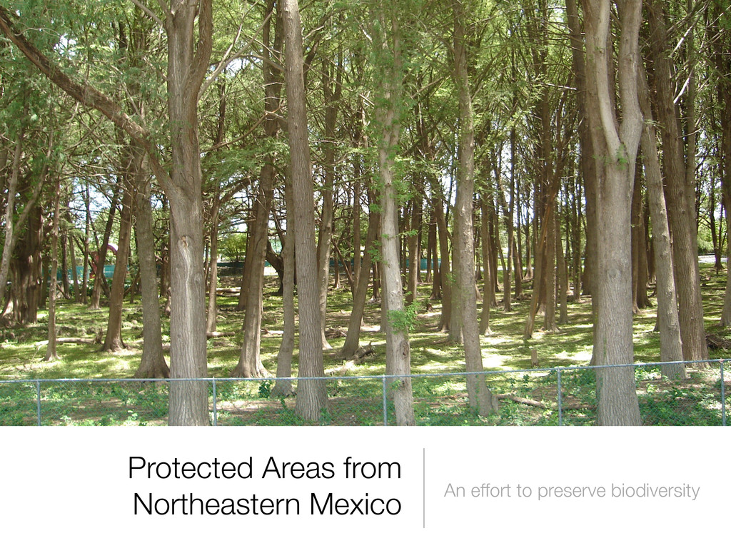 Protected Areas from Northeastern Mexico An eff...