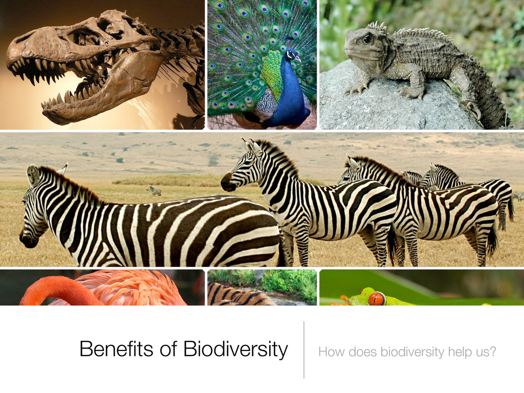 Benefits of Biodiversity How does biodiversity h...