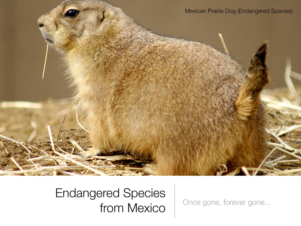 Endangered Species from Mexico Once gone, forev...
