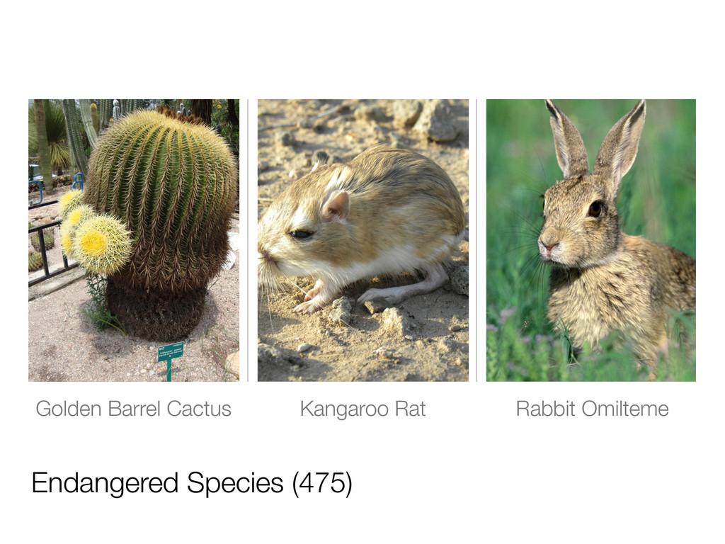 Endangered Species (475) Golden Barrel Cactus K...