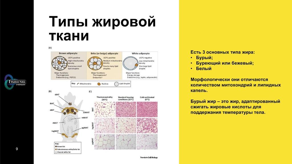 9 Типы жировой ткани Есть 3 основных типа жира:...