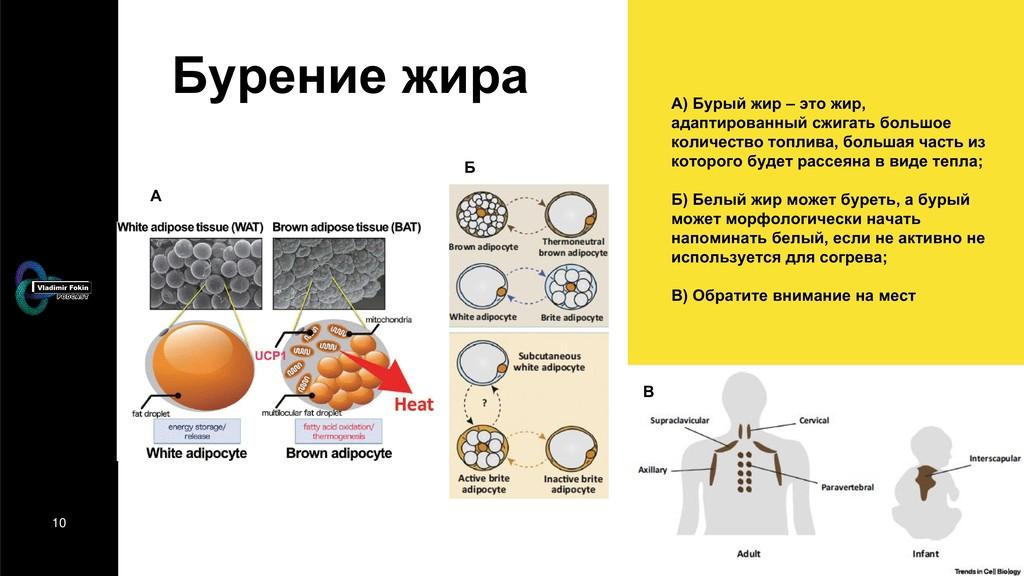 10 Бурение жира А) Бурый жир – это жир, адаптир...