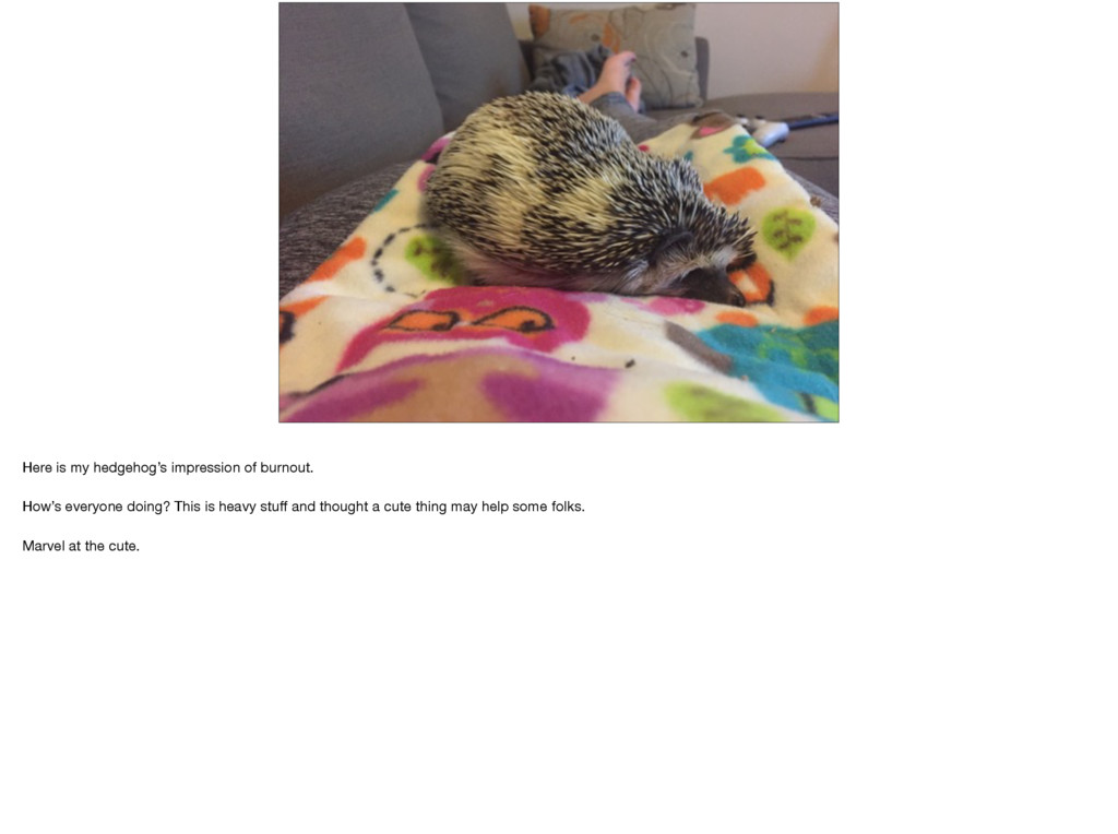 Here is my hedgehog's impression of burnout.  H...