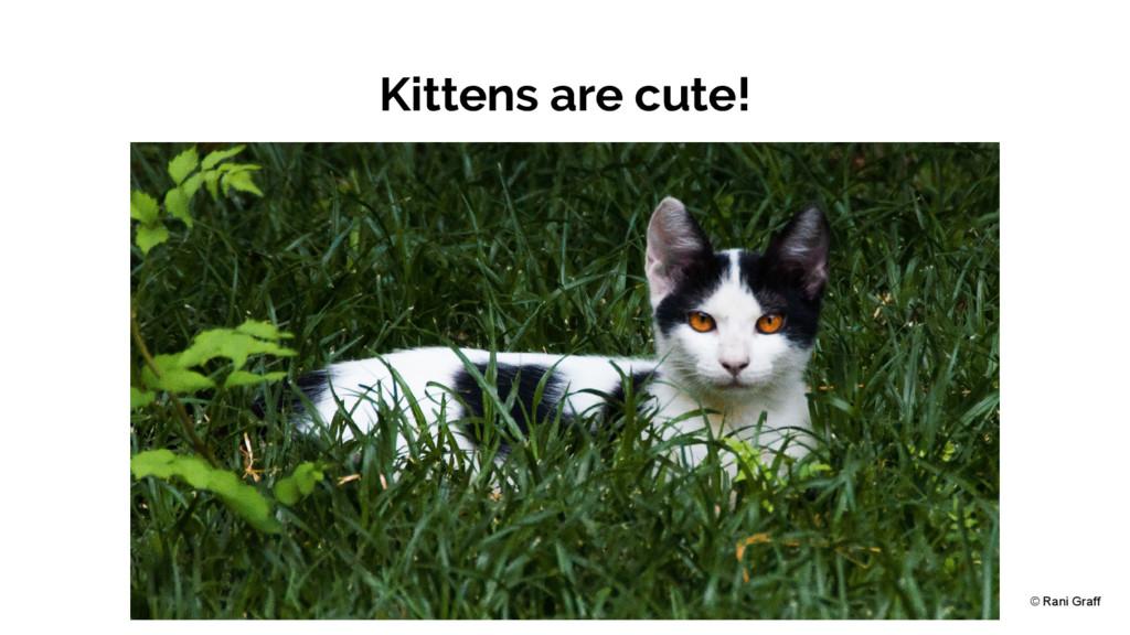 Kittens are cute! © Rani Graff