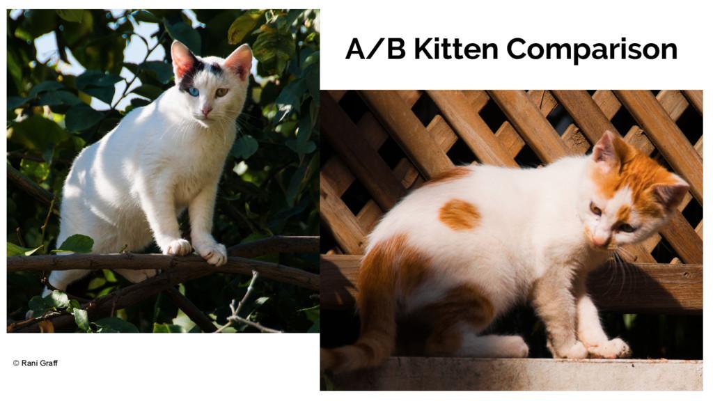 A/B Kitten Comparison © Rani Graff
