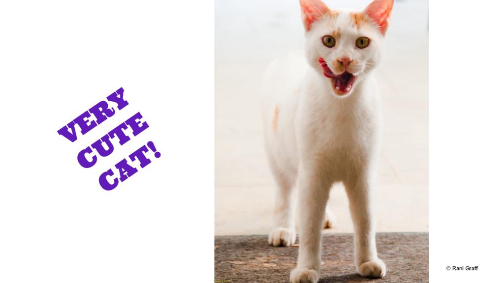 © Rani Graff VERY CUTE CAT!