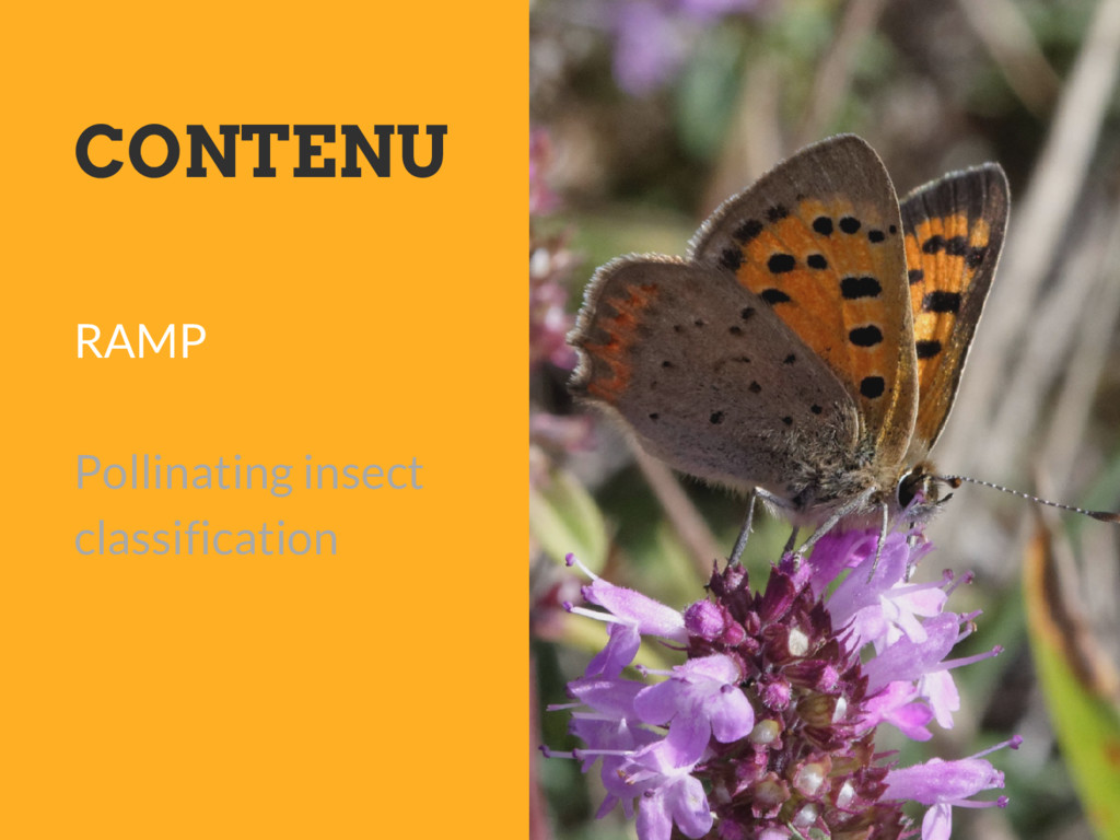 CONTENU RAMP Pollinating insect classification