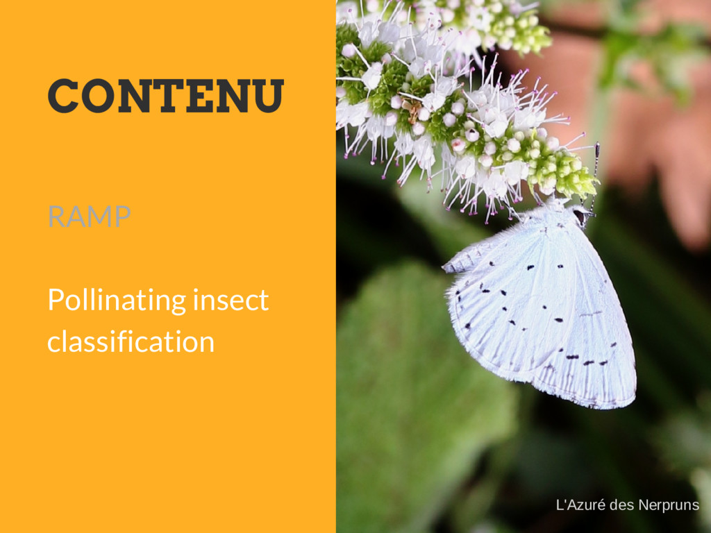 CONTENU RAMP Pollinating insect classification ...