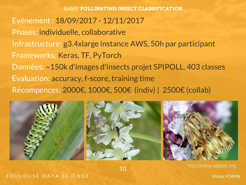 RAMP POLLINATING INSECT CLASSIFICATION Evénemen...