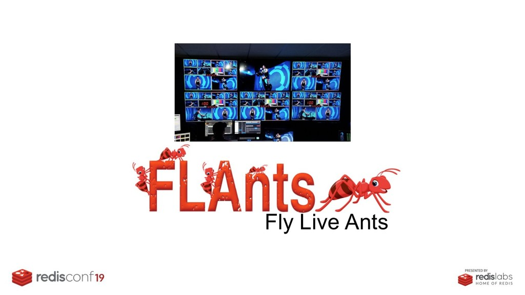 Fly Live Ants