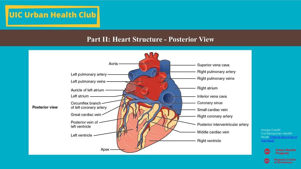 UIC Urban Health Club Part II: Heart Structure ...