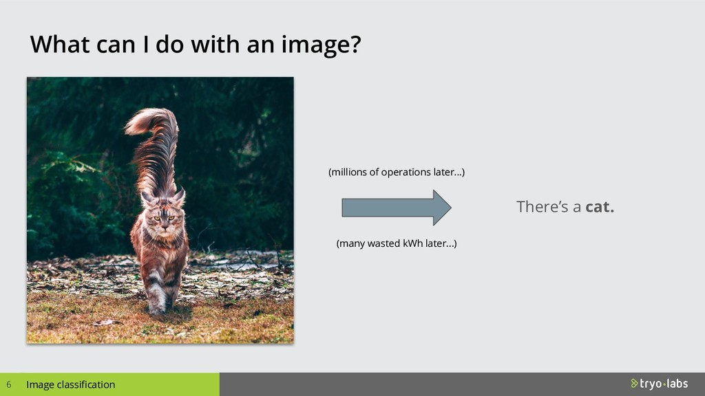 Image classification What can I do with an imag...