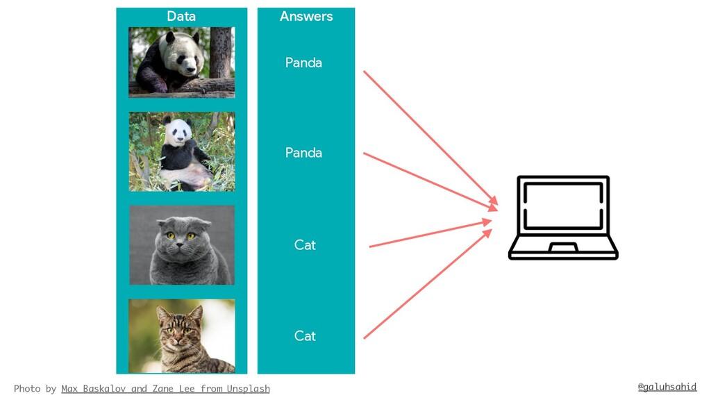 Answers Data Panda Cat Cat Photo by Max Baskalo...
