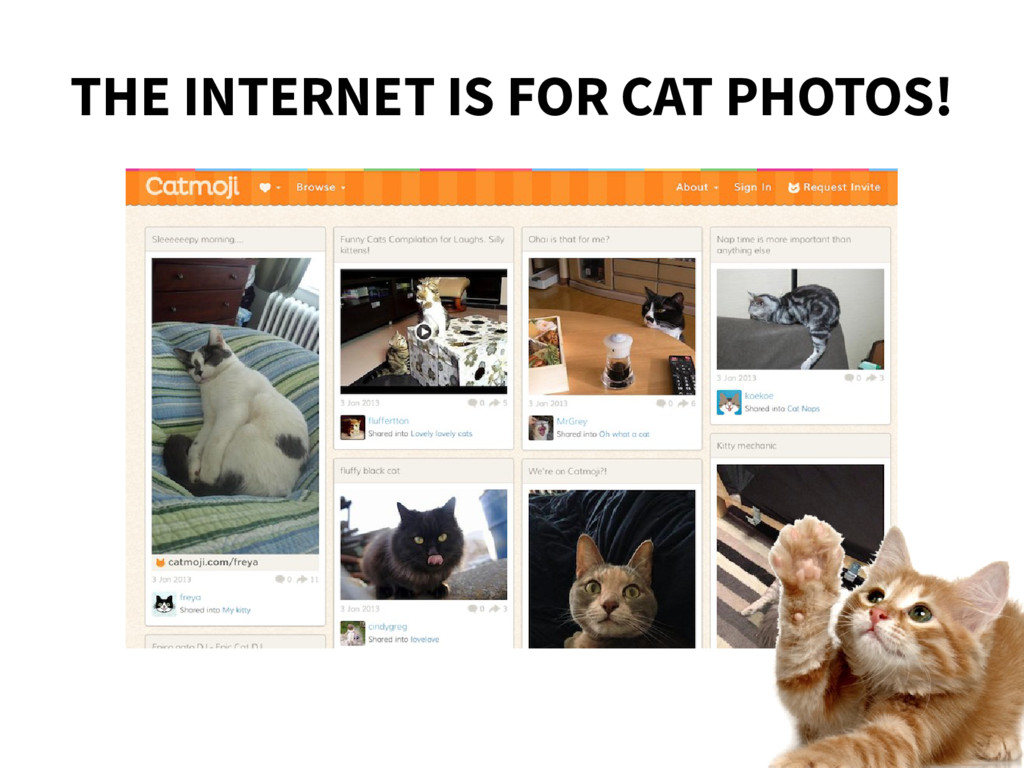 THE INTERNET IS FOR CAT PHOTOS!