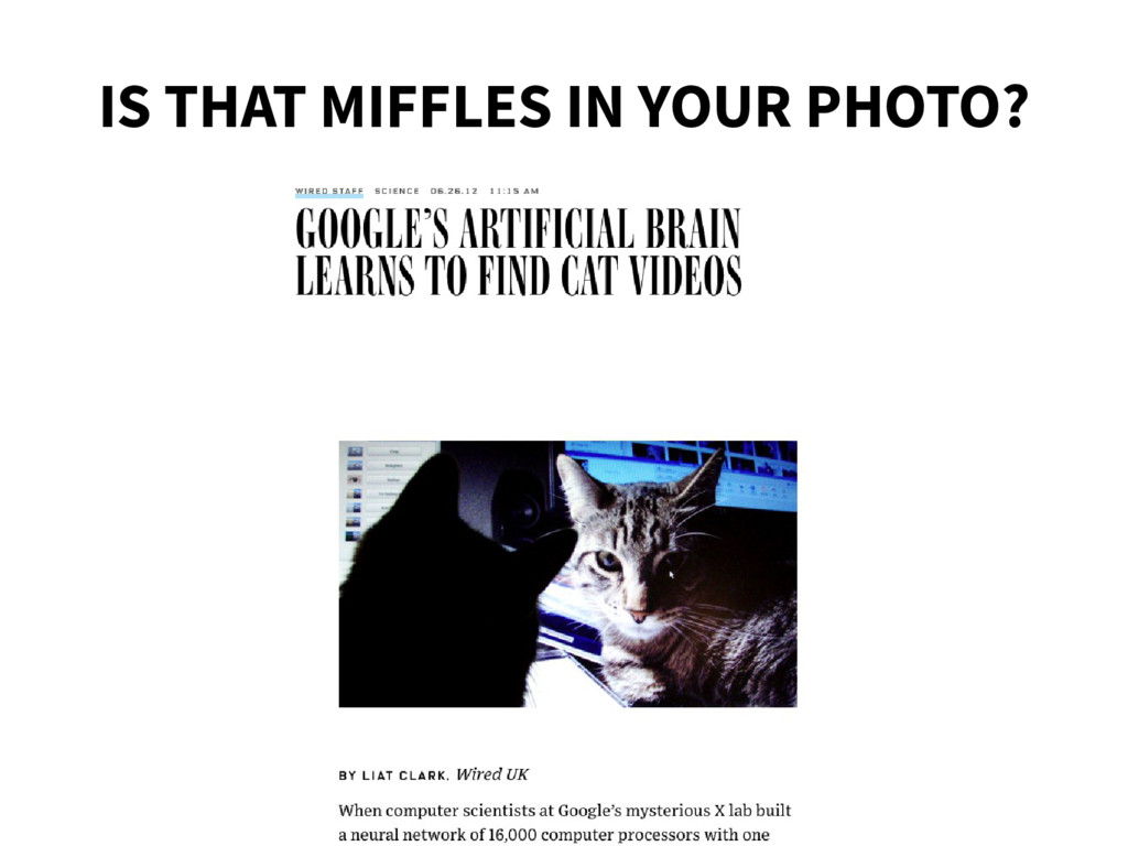 IS THAT MIFFLES IN YOUR PHOTO?