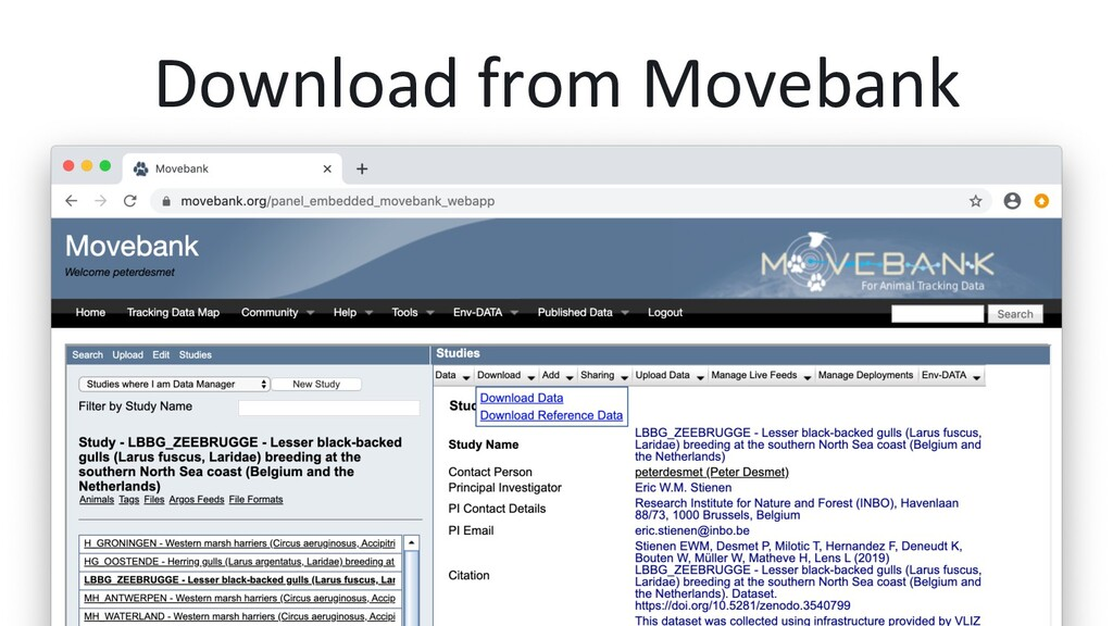 Download from Movebank
