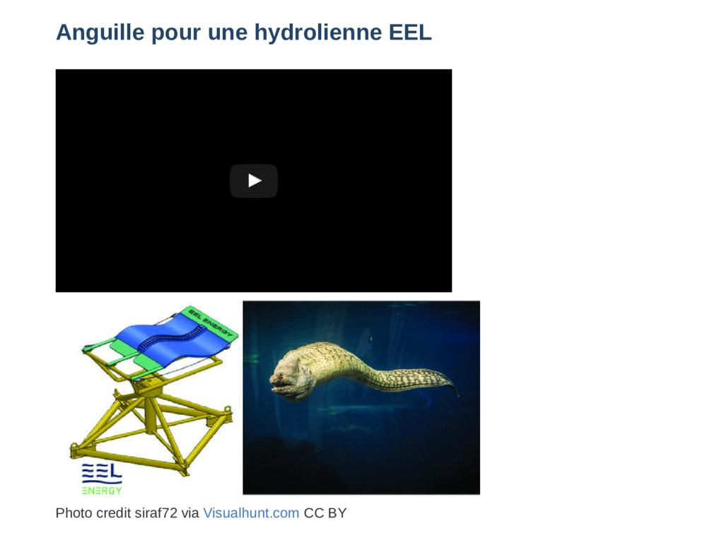 Anguille pour une hydrolienne EEL Décembre 2016...