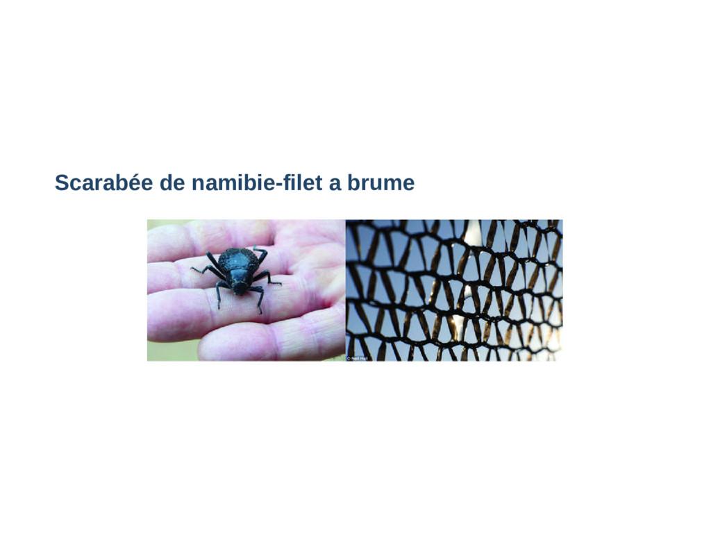 Scarabée de namibiefilet a brume