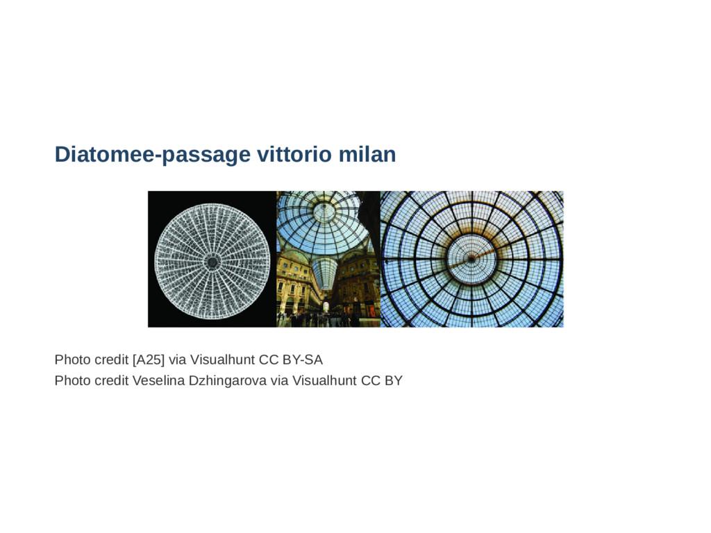 Diatomeepassage vittorio milan Photo credit [A...