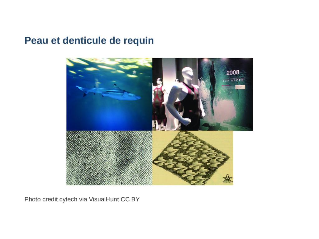 Peau et denticule de requin Photo credit cytech...
