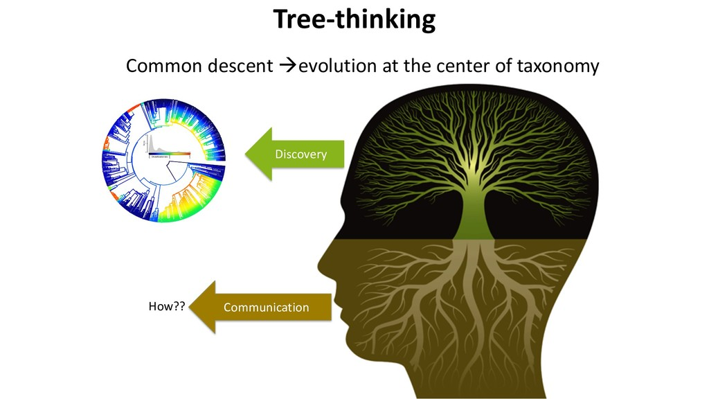 Tree-thinking Common descent àevolution at the ...