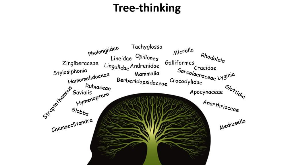 Tree-thinking Berberidopsidaceae Opiliones Zing...