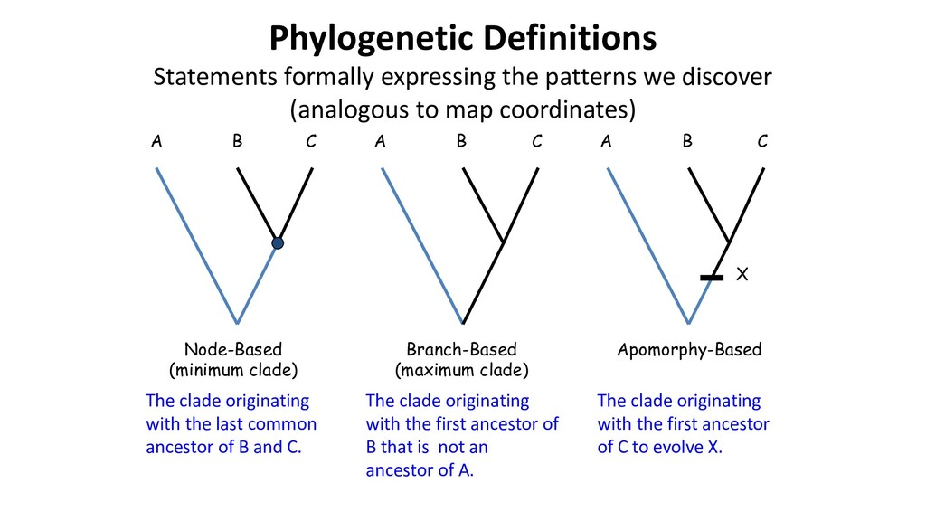 Phylogenetic Definitions Statements formally ex...