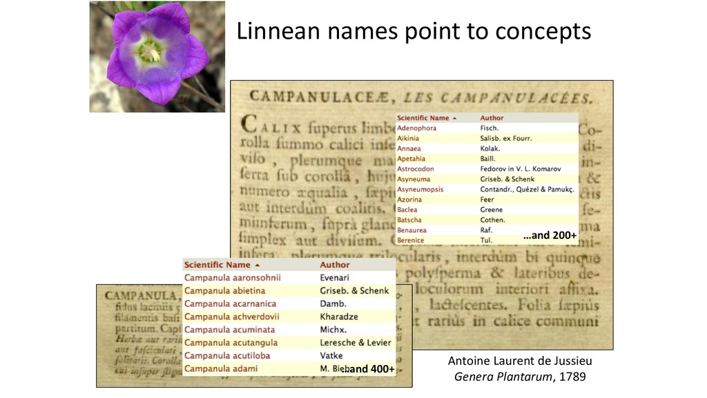 Linnean names point to concepts Antoine Laurent...