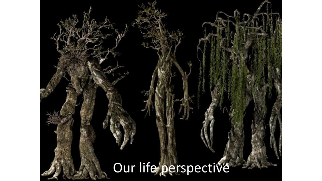 Our life perspective