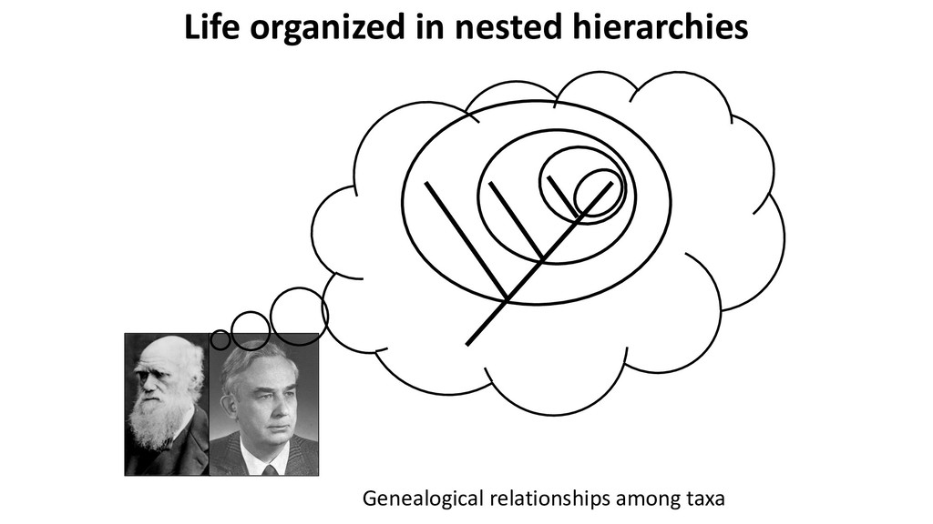 Genealogical relationships among taxa Life orga...