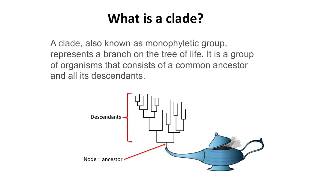 A clade, also known as monophyletic group, repr...