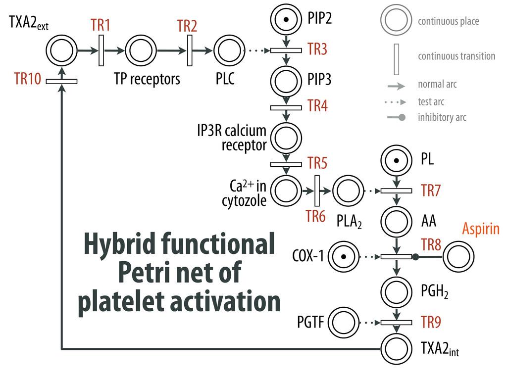 Hybrid functional Petri net of platelet activat...