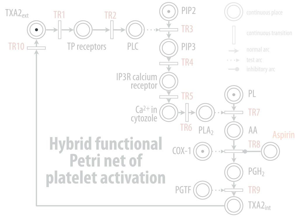 TXA2ext TP receptors PLC PIP2 PIP3 IP3R calcium...