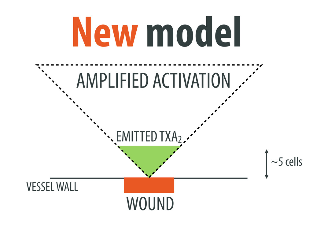 ~5 cells WOUND VESSEL WALL New model AMPLIFIED ...