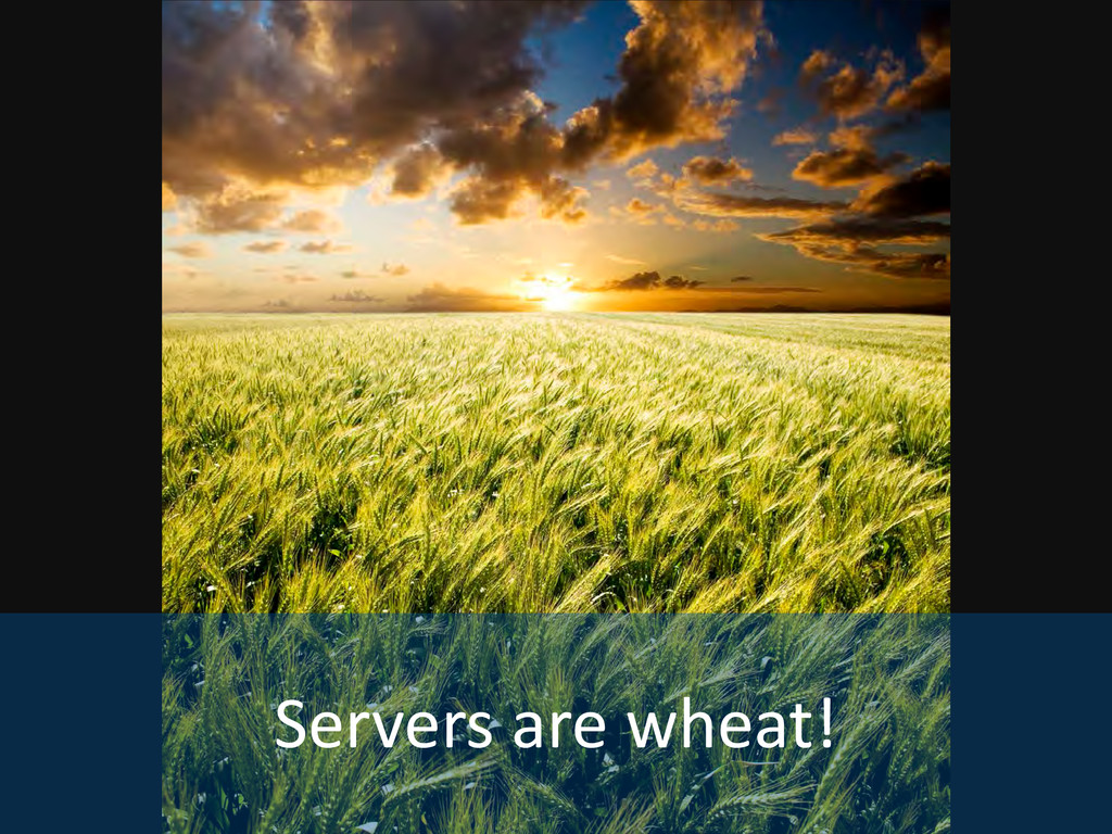 Servers are wheat!