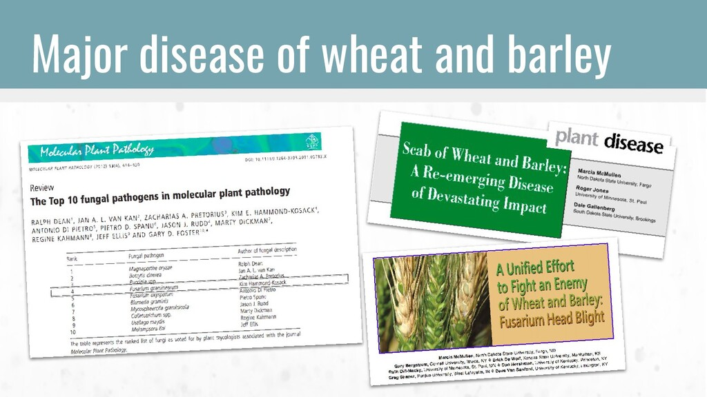Major disease of wheat and barley