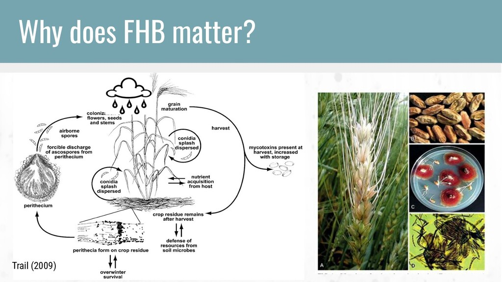 Trail (2009) Why does FHB matter? Trail (2009)