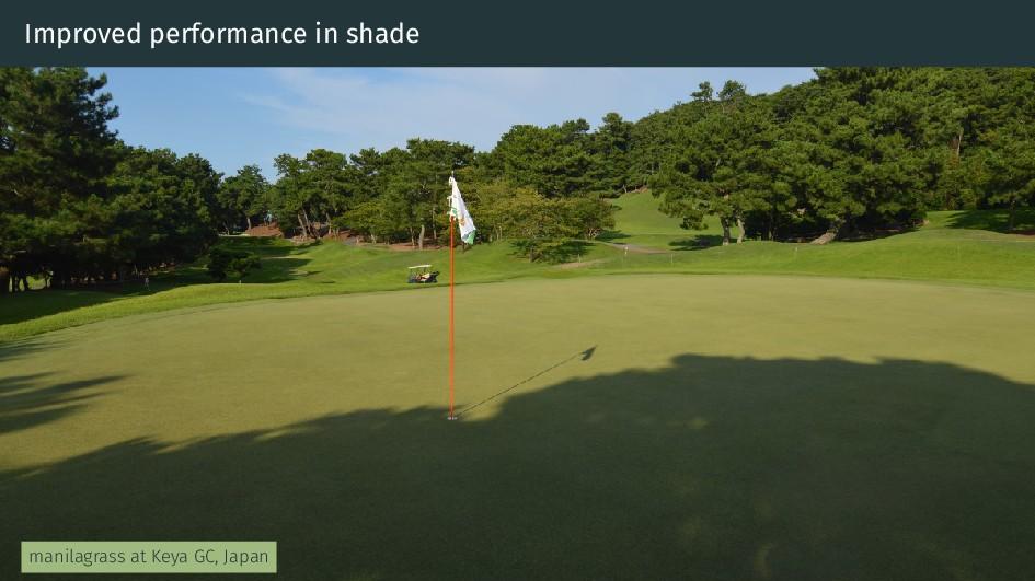 Improved performance in shade manilagrass at Ke...
