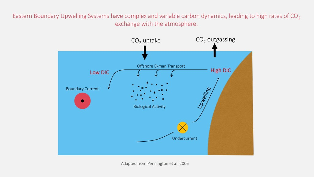 Boundary Current Undercurrent CO2 outgassing Ea...