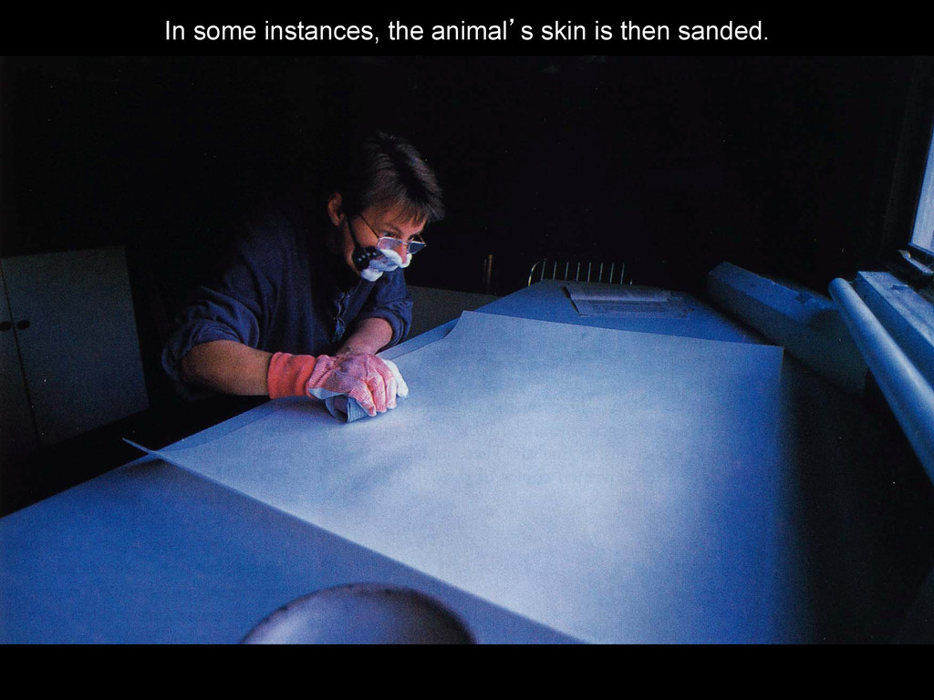 In some instances, the animal's skin is then sa...