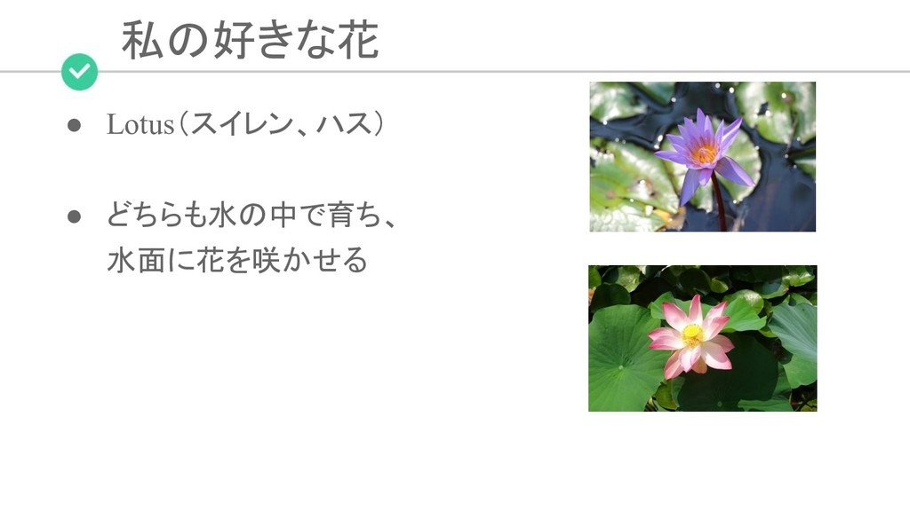 私の好きな花 ● Lotus(スイレン、ハス) ● どちらも水の中で育ち、 水面に花を咲かせる
