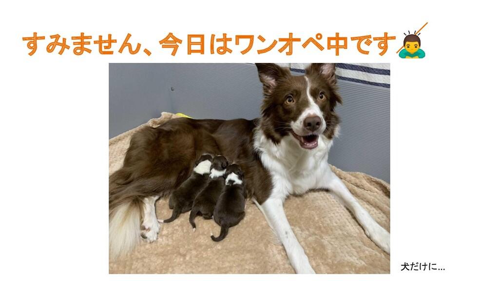 すみません、今日はワンオペ中です 犬だけに…